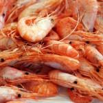 Puntos de cocción del marisco