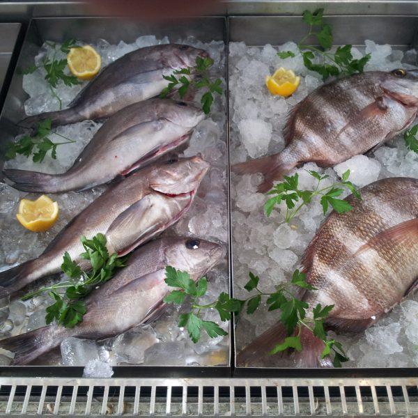 Traemos pescado fresco de roca